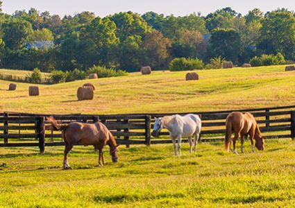 Horses need quality, nutritional equine feed like that from Hueber Feed
