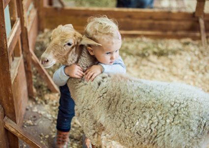 Sheep getting hugged by kid needs quality, nutritional sheep feed like that from Hueber Feed.
